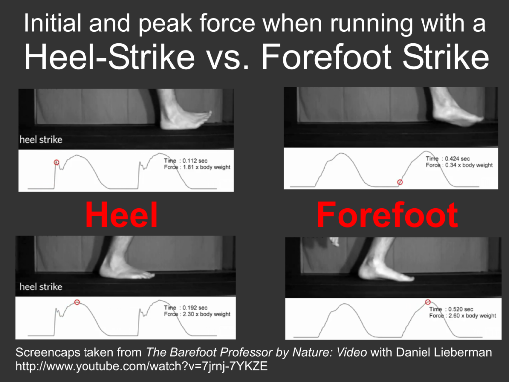 Lieberman Study on Barefoot Running